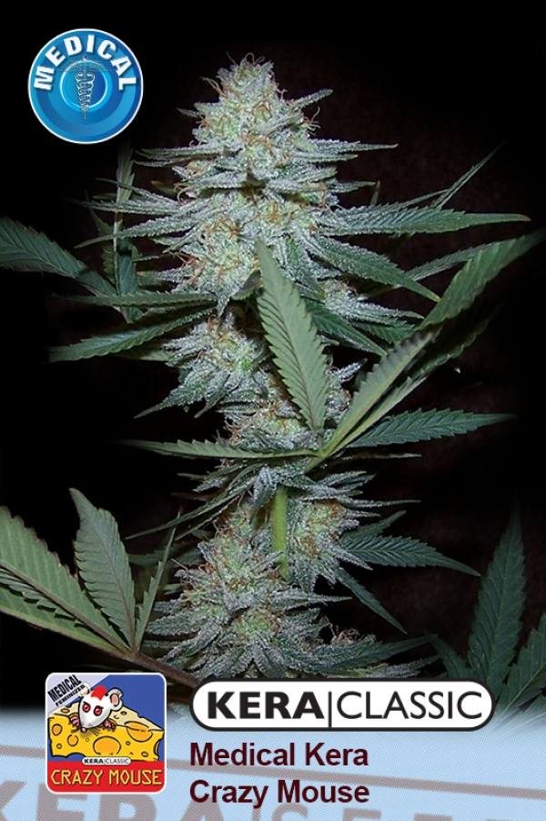 Medical Crazy Mouse (Medical Cheese) Feminised Cannabis Seeds | Kera Seeds