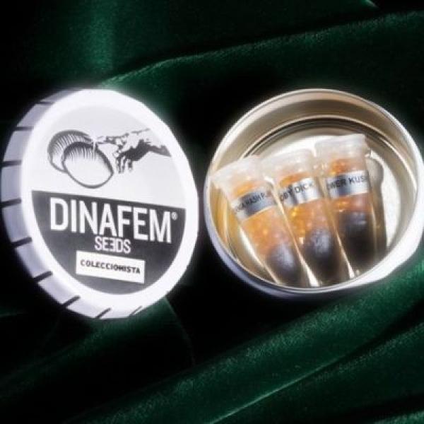 Dinafem Mix Feminised Cannabis Seeds