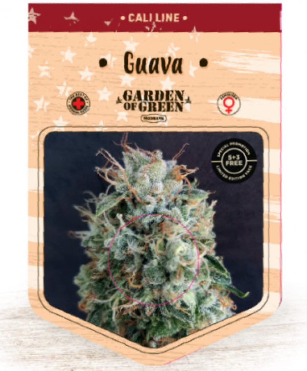 Guava Feminised Cannabis Seeds | Garden of Green