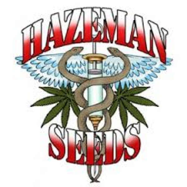 Hazeman Seeds | Discount Cannabis Seeds