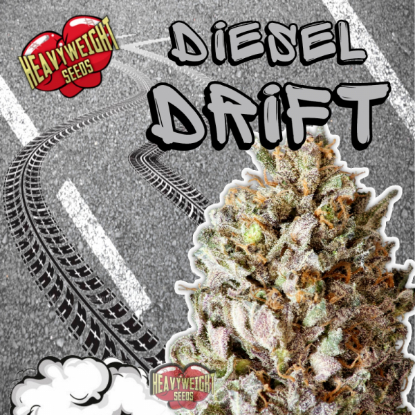 Diesel Drift Feminised Cannabis Seeds | Heavyweight Seeds