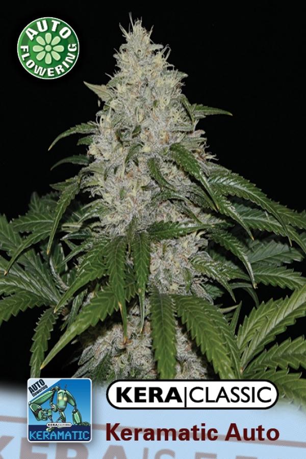 Keramatic Auto Feminised Cannabis Seeds   Kera Seeds