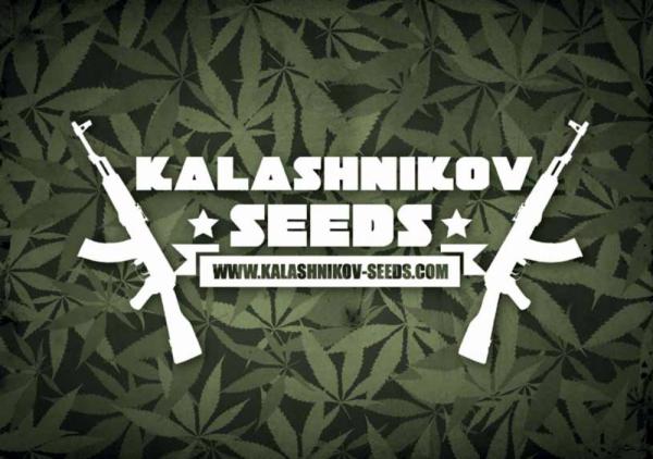 Kalashnikov Seeds   Discount Cannabis Seeds