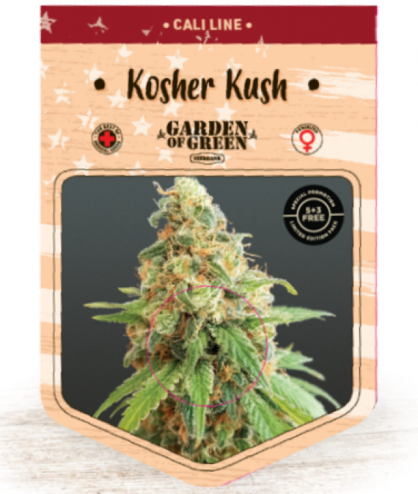 Kosher Kush Feminised Cannabis Seeds | Garden of Green