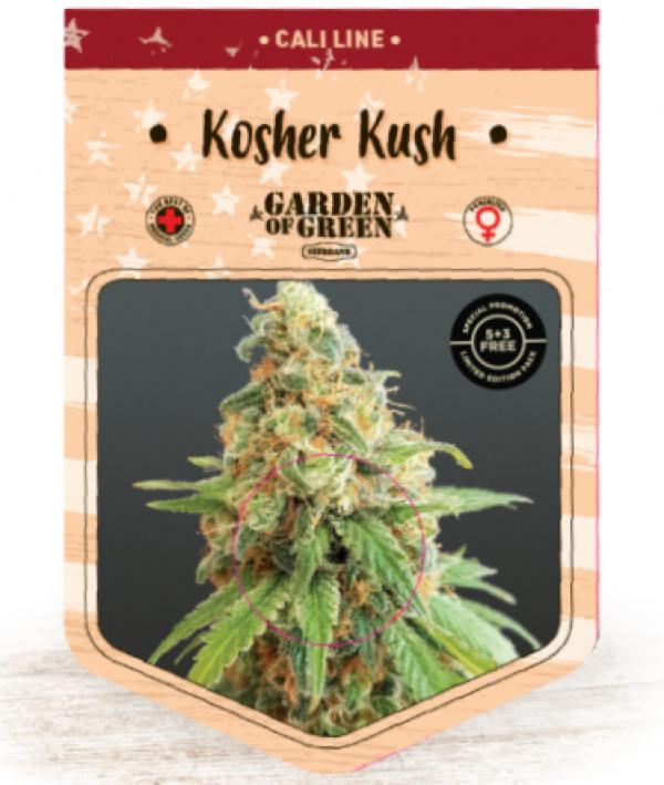 Kosher Kush Feminised Cannabis Seeds   Garden of Green