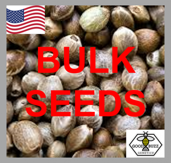 Bruce Banner Feminized Cannabis Seeds | Good Buzz Genetics