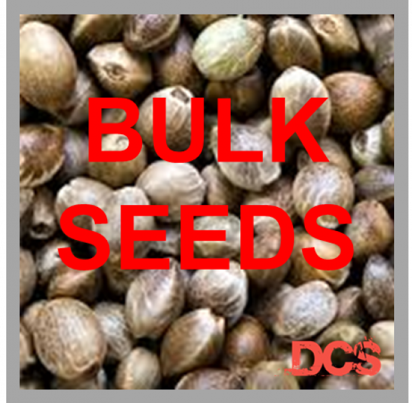 Auto Critical + Feminised Cannabis Seeds  | 100 Bulk Seeds