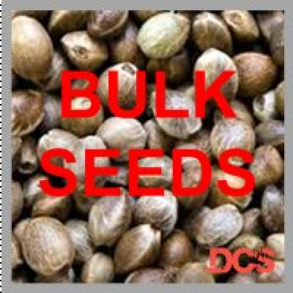 Bulk Cannabis Seeds from Discount Cannabis Seeds
