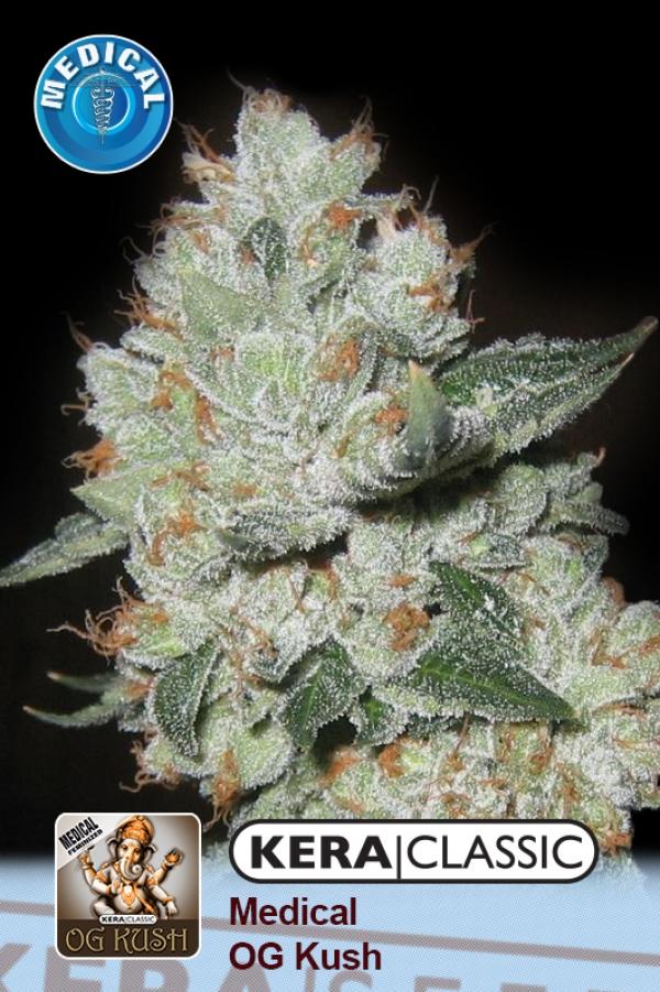 Medical OG Kush Feminised Cannabis Seeds   Kera Seeds
