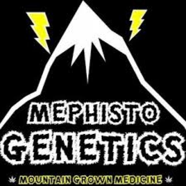Mephisto Genetics Autoflowering Feminised Cannabis Seeds | Discount Cannabis Seeds