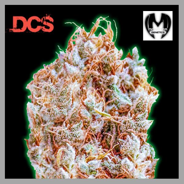 Monster Zkittles Feminised Cannabis Seeds | Monster Genetics