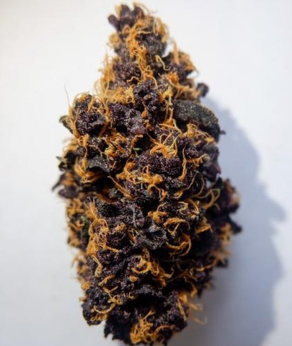 Purple Punch Auto - Tastebudz - Discount Cannabis Seeds