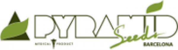 Pyramid Seeds | Discount Cannabis Seeds