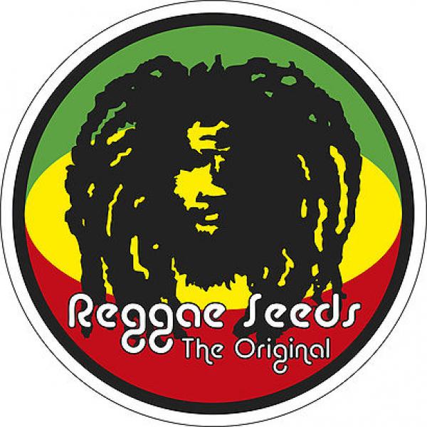 Reggae Seeds   Discount Cannabis Seeds