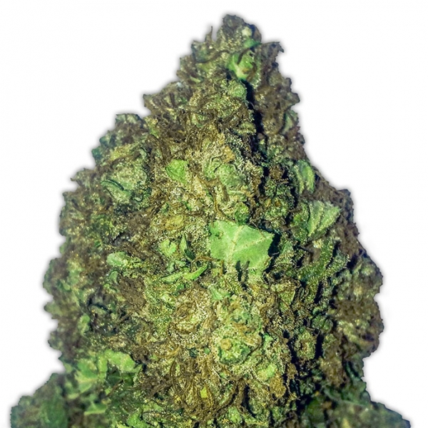Short and Sweet Auto Feminised Cannabis Seeds | Heavyweight Seeds