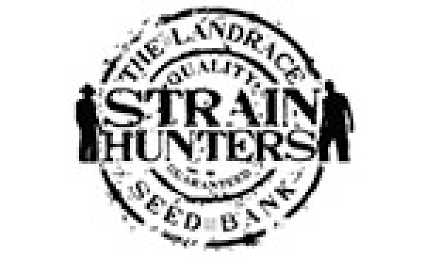 Strain Hunters | Discount Cannabis Seeds