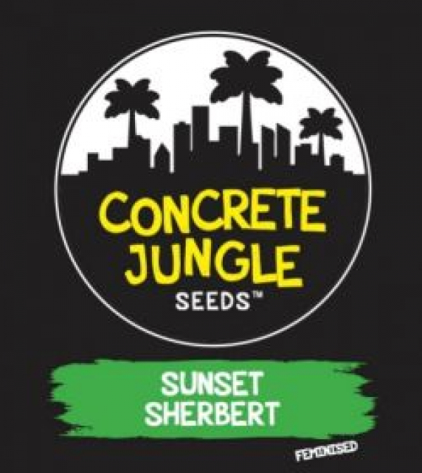 Sunset Sherbet Feminised | Concrete Jungle Seeds | Discount