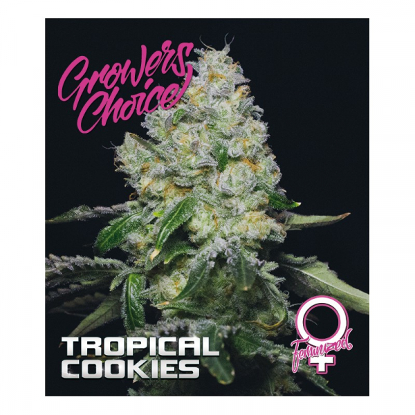 Tropical Cookies Feminised Cannabis Seeds - Growers Choice