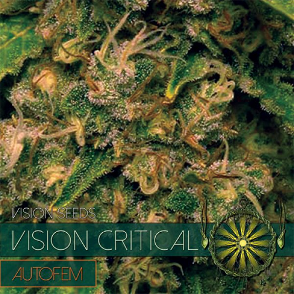 Vision Critical Auto Feminised Cannabis Seeds - Vision Seeds