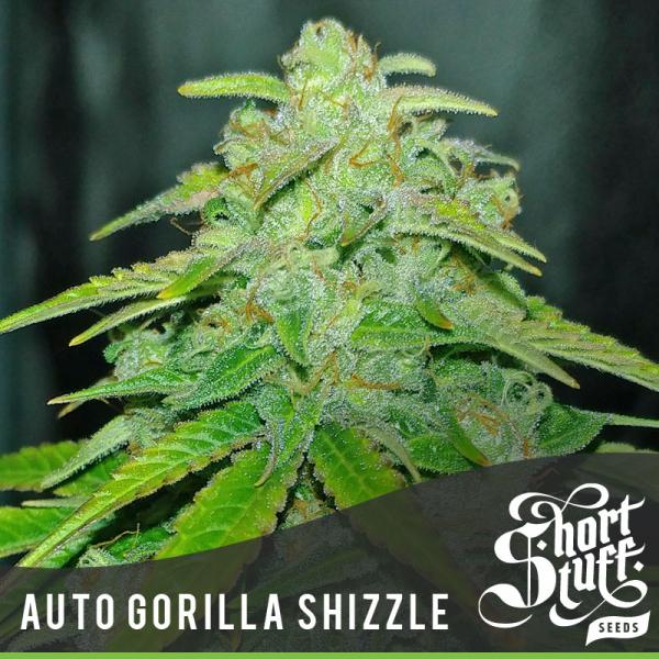 Auto Gorilla Shizzle Feminised Cannabis Seed   Short Stuff Seeds