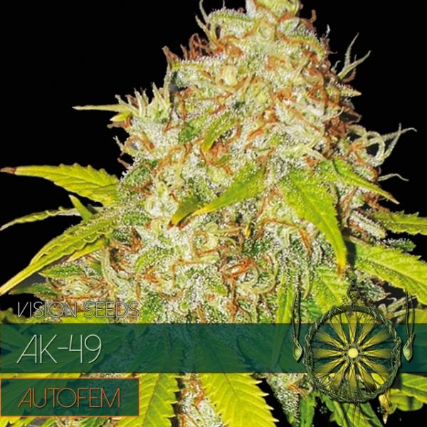 AK-49 Auto Feminised Cannabis Seeds   Vision Seeds