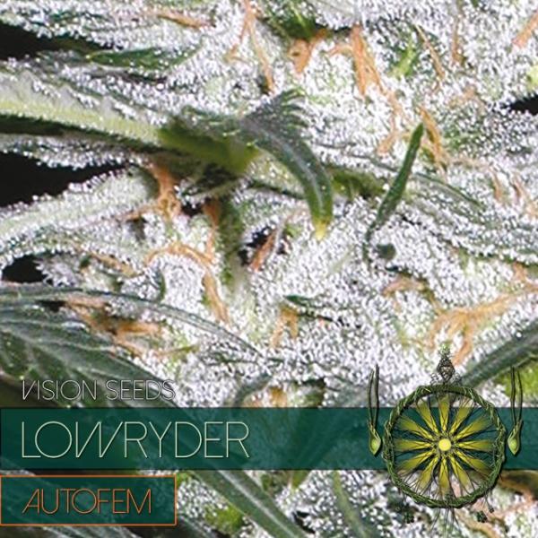 Lowryder Auto Feminised Cannabis Seeds