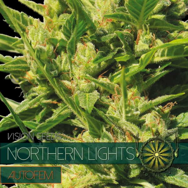 Northern Lights Auto Feminised Cannabis Seeds