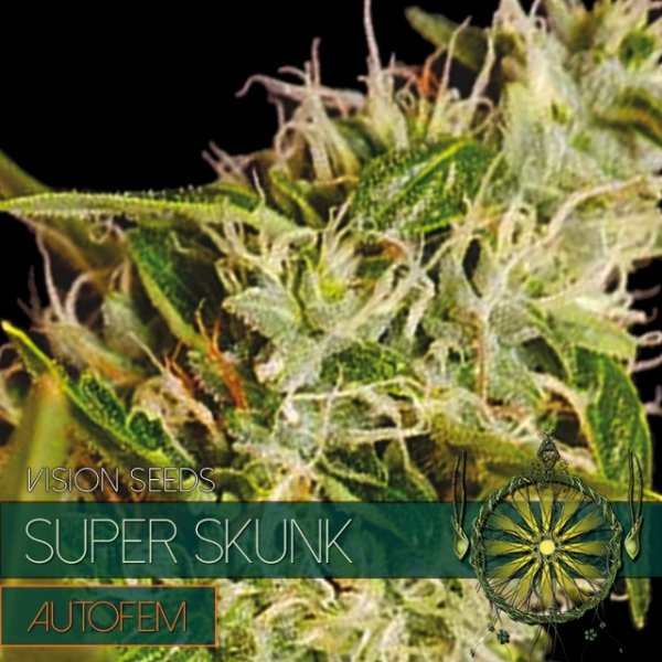 Super Skunk Auto Feminised Cannabis Seeds | Vision Seeds