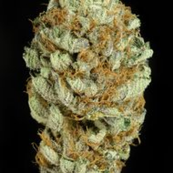 Blue Kush Feminised Cannabis Seeds | Dinafem Seeds