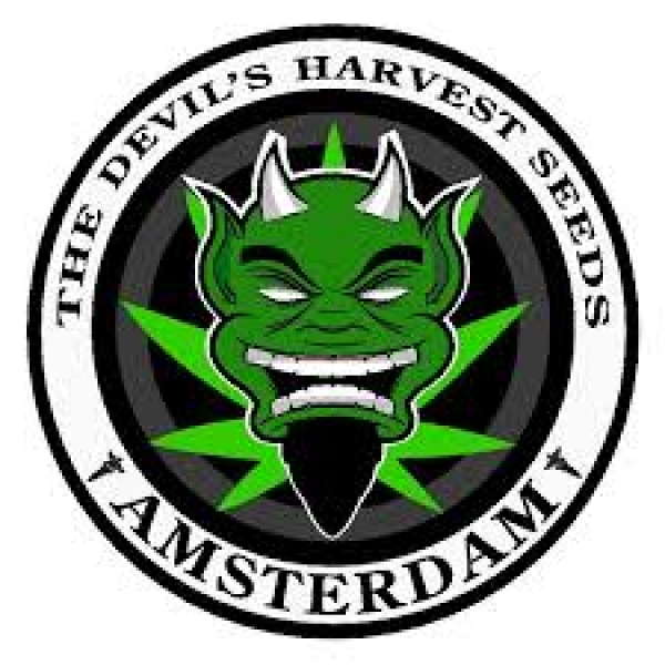 Devil's Harvest Cannabis Seeds | Discount Cannabis Seeds