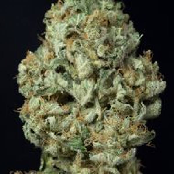 Dinamex Auto Feminised Cannabis Seeds