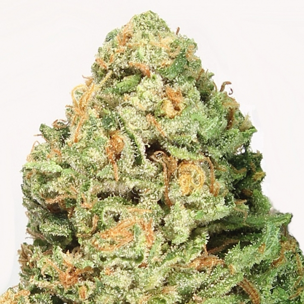 Fruit Punch Feminised Cannabis Seeds | Heavyweight Seeds