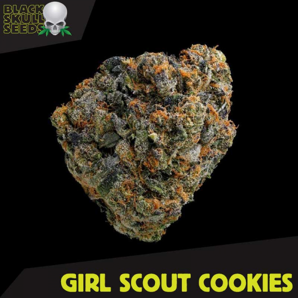 Girl Scout Cookies Feminized Cannabis Seeds | Black Skull Seeds