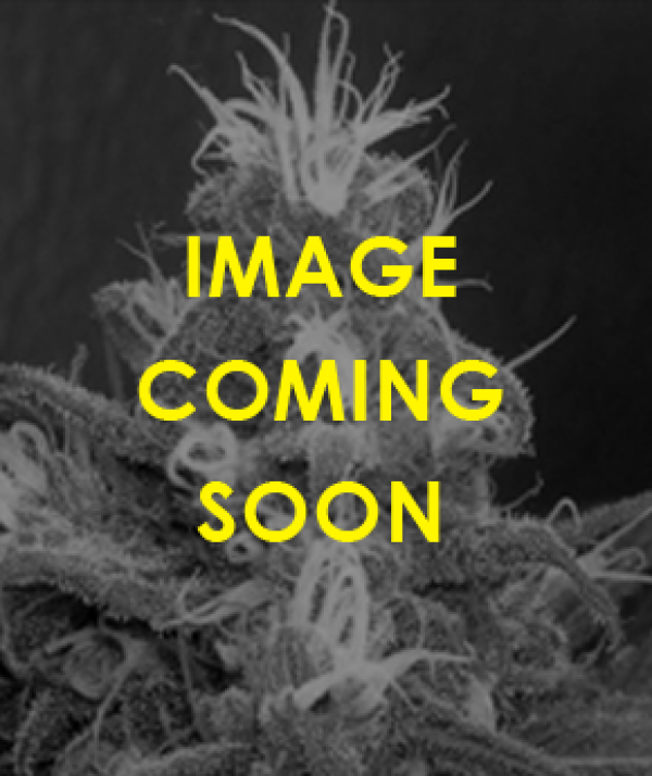 Cannaberry Regular Cannabis Seeds | Apothecary Genetics Seeds