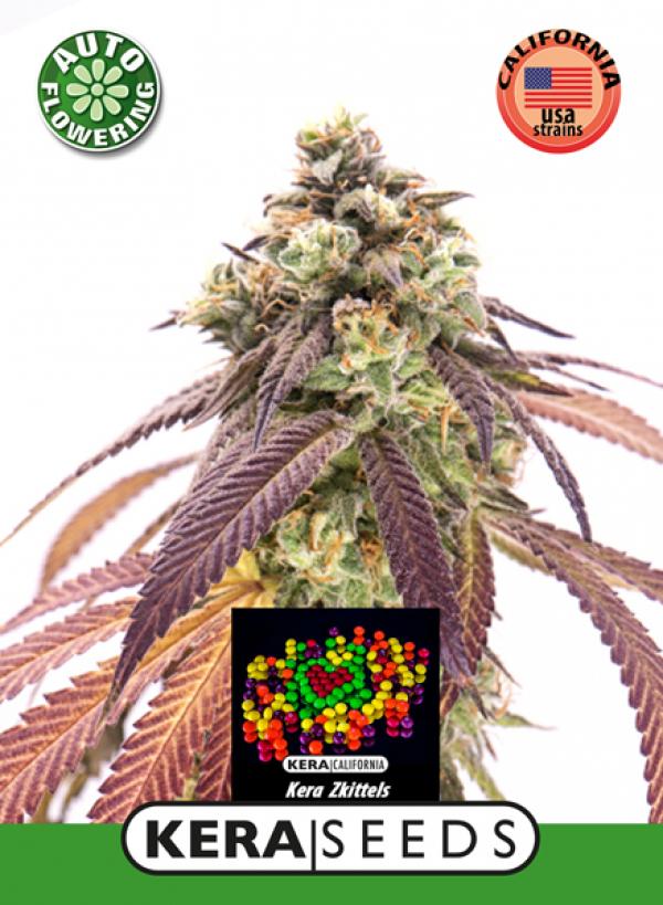 Zkittlez Auto Feminised Cannabis Seeds | Kera Seeds