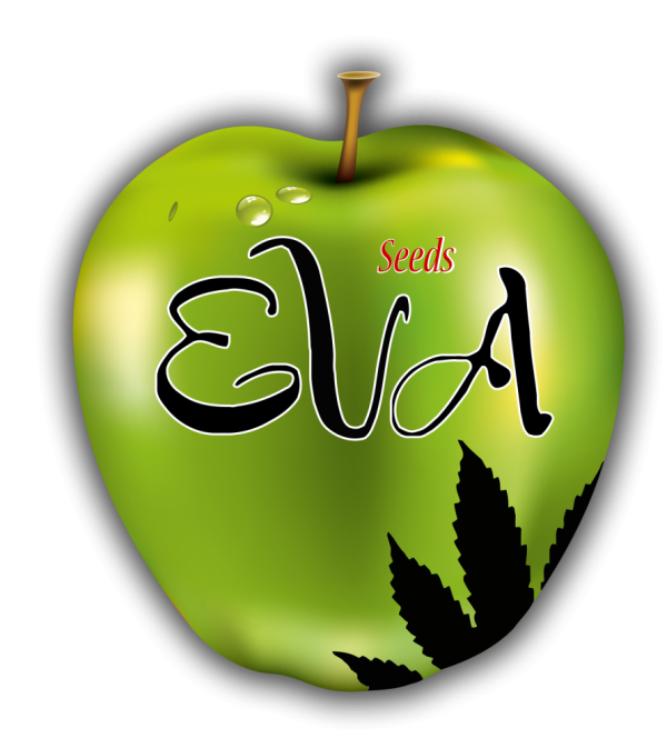 Eva Female Seeds | Discount Cannabis Seeds