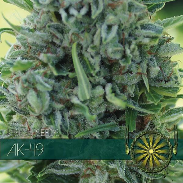 AK-49 Feminised Cannabis Seeds | Vision Seeds