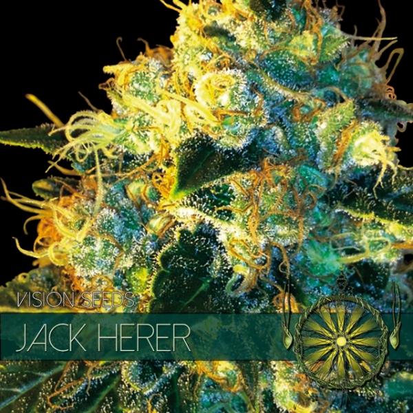 Jack Herer Feminised Cannabis Seeds | Vision Seeds