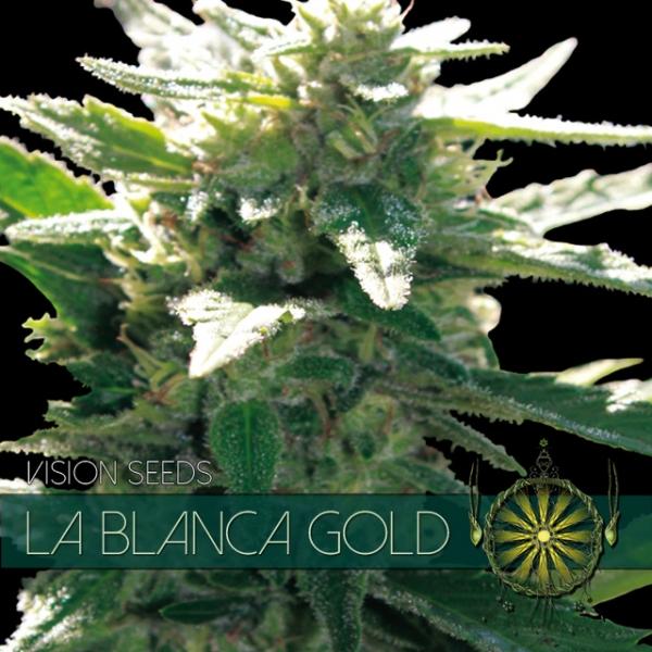 La Blanca Gold Feminised Cannabis Seeds
