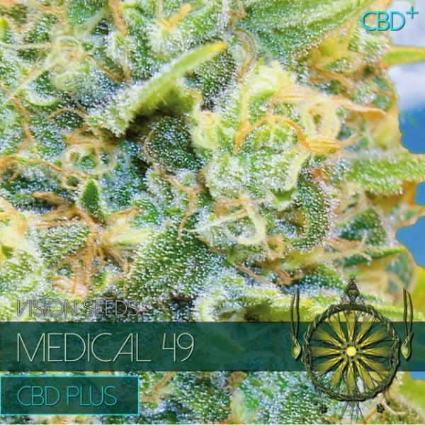 Medical 49 CBD+ Feminised Cannabis Seeds   Vision Seeds