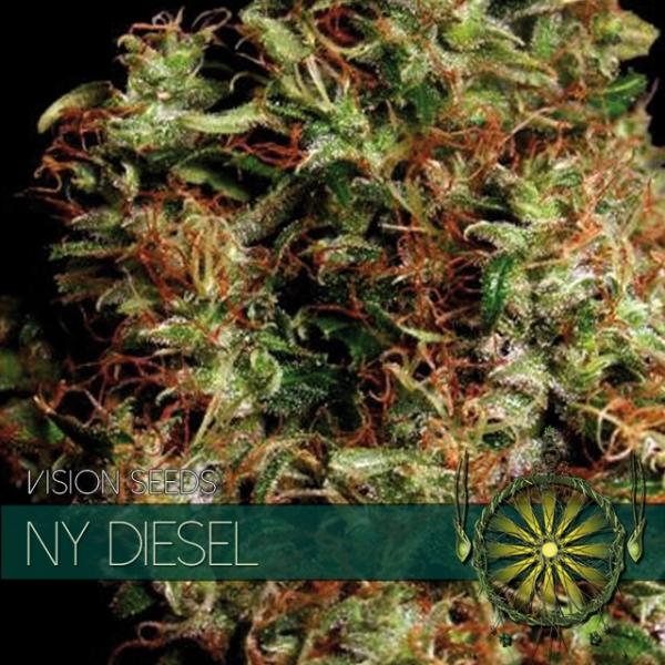 NY Diesel Feminised Cannabis Seeds   Vision Seeds