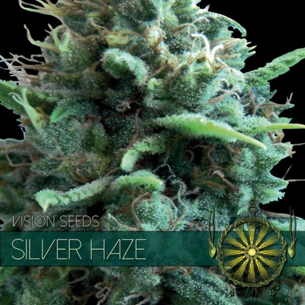 Silver Haze Feminised Cannabis Seeds | Vision Seeds