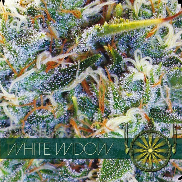 White Widow Feminised Cannabis Seeds | Vision Seeds