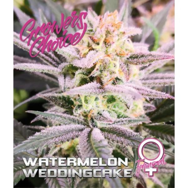Watermelon Wedding Cake Feminised Cannabis Seeds - Growers Choice