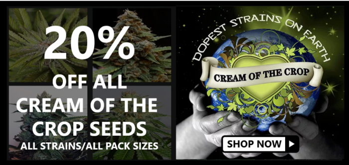 20% Off Cream of the Cream Seeds - Discount Cannabis Seeds
