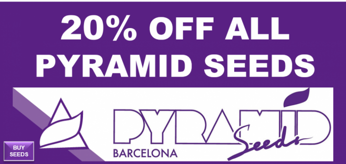 Pyramid Seeds 20% Off All Seeds from Discount Cannabis Seeds