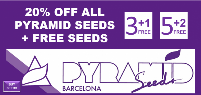 20% Off All Pyramid Seeds - Discount Cannabis Seeds