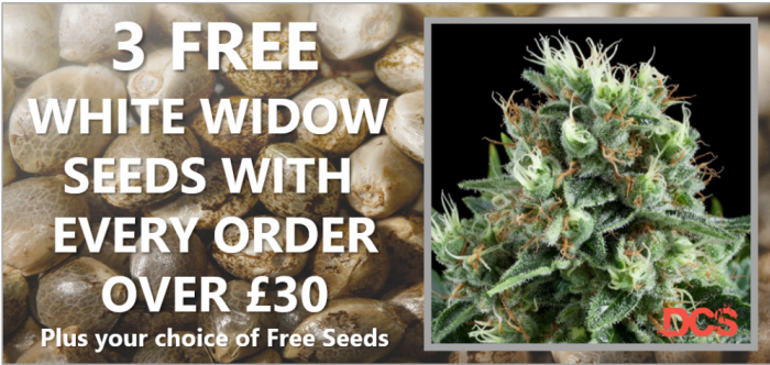 3 Free White Widow Seeds - Discount Cannabis Seeds