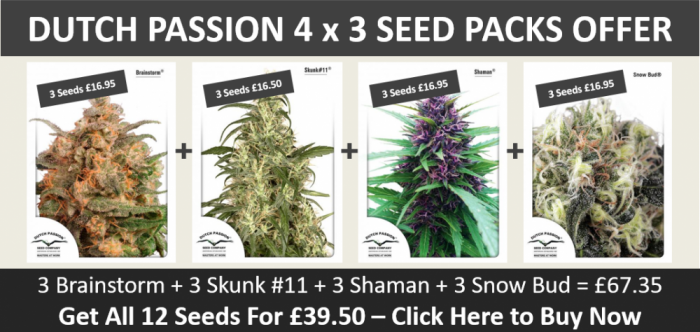 4 x 3 Dutch Passion Feminised Seed Packs | Discount Cannabis Seeds