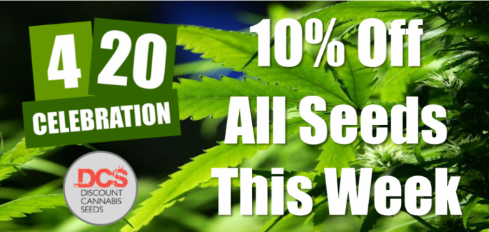 420 Celebration | Discount Cannabis Seeds